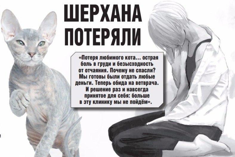 очень картинки о потере кошки вкусу, растительное