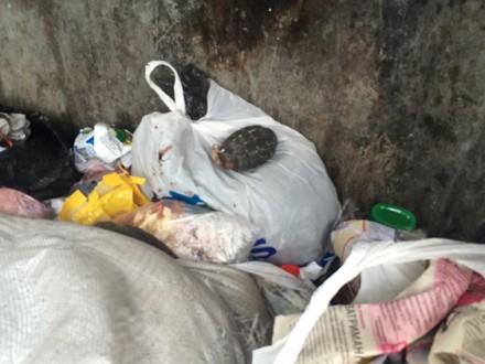 Ребенок отыскал водворе дома гранату воВладивостоке