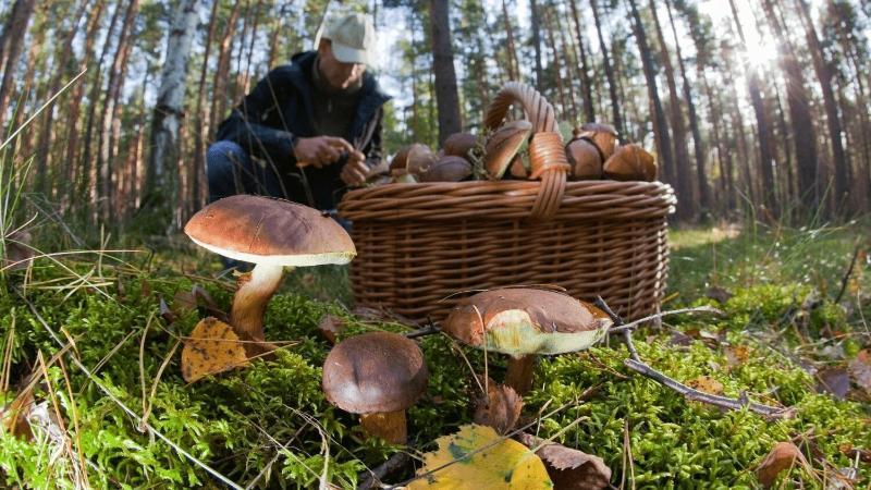 где больше всего грибов в россии